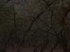 rel7d_-2013-04-26_05-30-01
