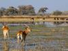 2018 | Moremi, Botswana