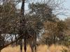 2018 | Moremi, Xakanaxa, Botswana