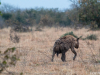 2018 | Trans Chobe NP, Botswana