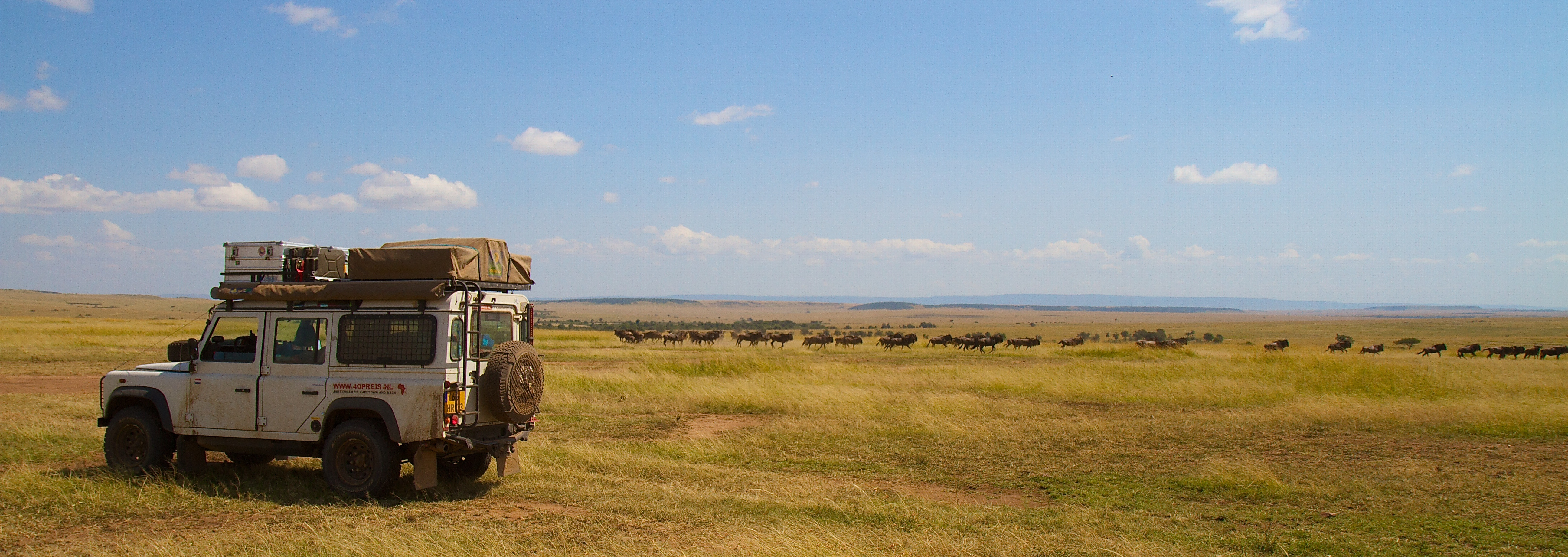 Kenya, Masai Mara, Wildebeasts